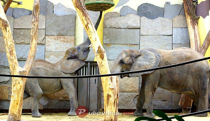 Becki Zooloski Vrt Schonbrunn Vodici Na Putovnica Net