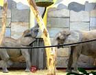 Bečki zoološki vrt Schönbrunn