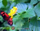 Kuća leptira u Beču