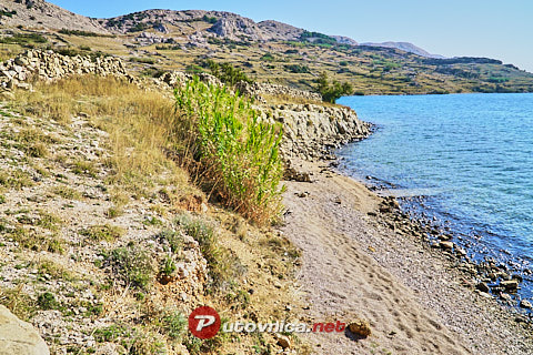 Barbat Middle Beach, Zubovići (Pag)