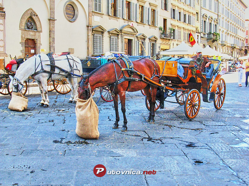 Florence: Horse-drawn carriages