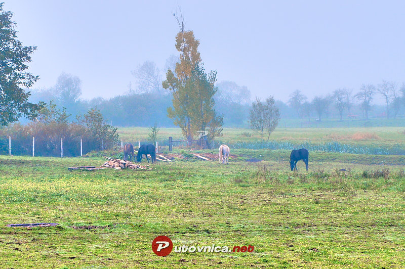 Otočac: Horses by the Gacka River